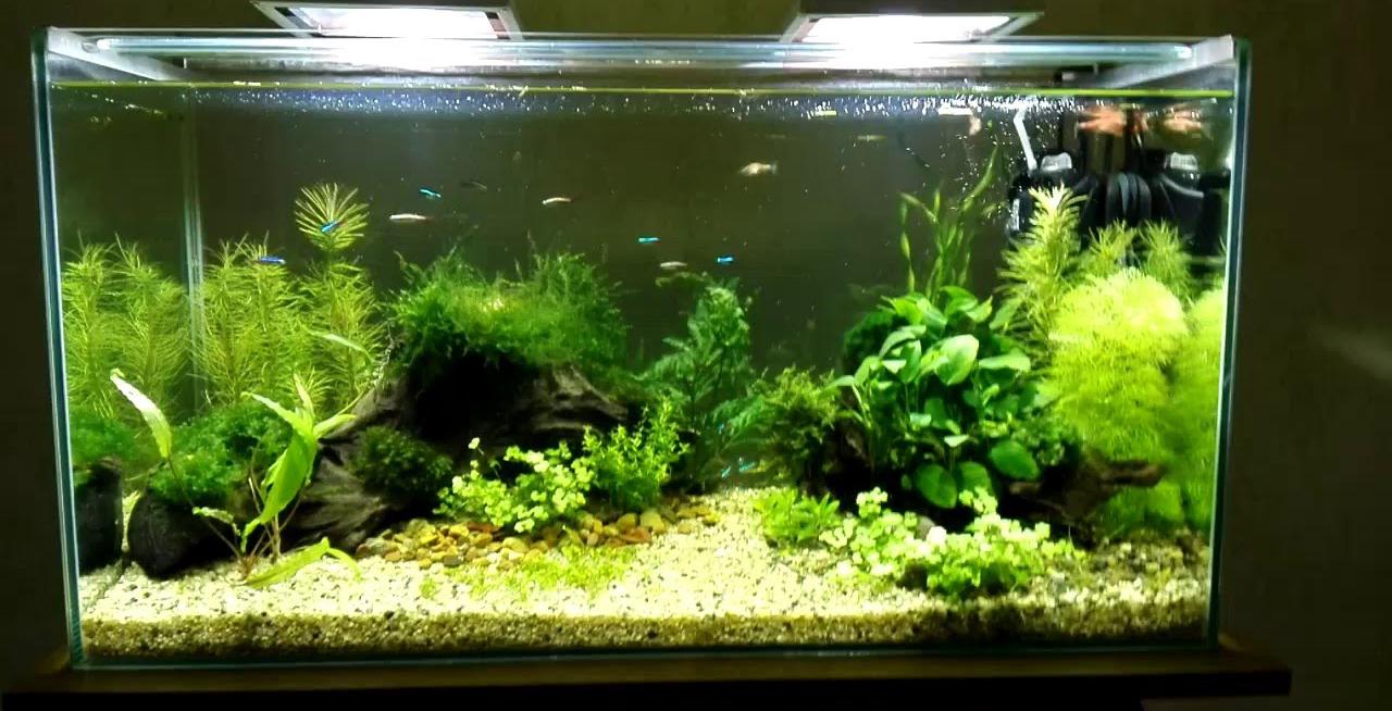 Светодиодное освещение аквариума